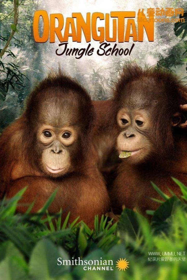 亲子纪录片《猩球学院 Orancutan Jungle School》全10集 国语中字 1080P/MP4/8.72G 儿童动物纪录片下载插图
